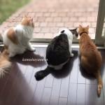 猫とカマキリ1-1