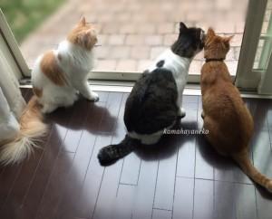 猫とカマキリ1-2