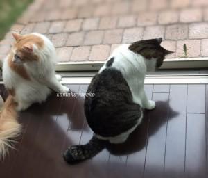 猫とカマキリ1-3