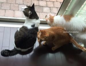 猫とカマキリ1-4