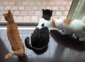 猫とカマキリ1-5