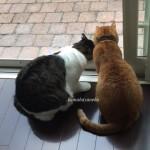 猫とカマキリ2-11