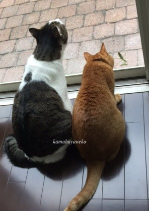 猫とカマキリ2-2