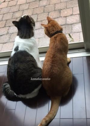 猫とカマキリ2-4