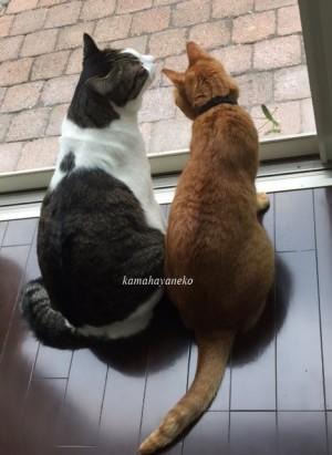 猫とカマキリ2-5