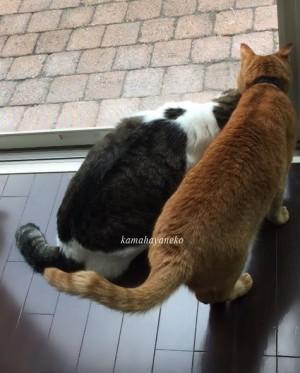 猫とカマキリ2-9