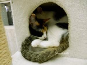 猫カフェ2-4