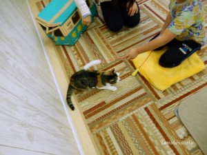 猫カフェ2-6