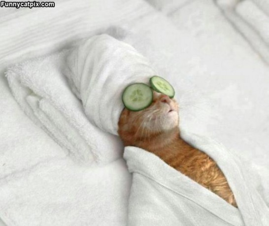Spa_Day