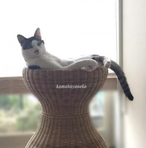 籐椅子で2