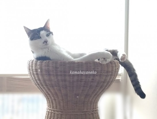 籐椅子で3