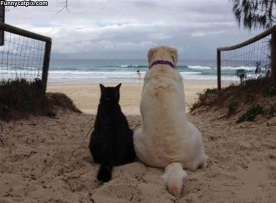 Lifes_A_Beach